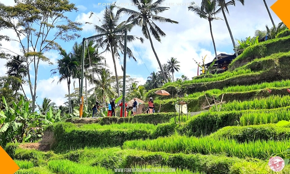 Backpacking Bali overview - Forever Roaming the World - Pic 4