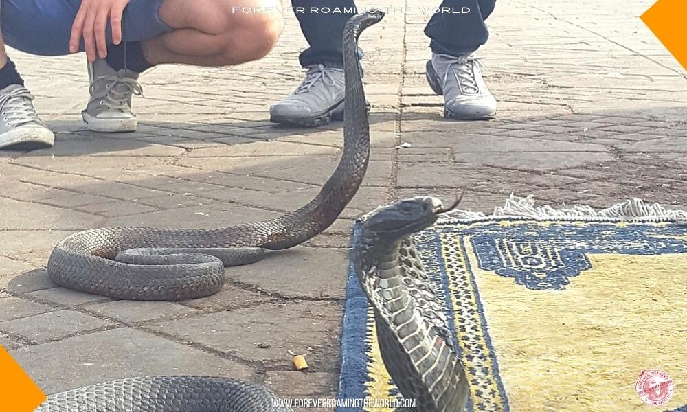 Marrakech medina blog post - Forever Roaming the World - Pic 6