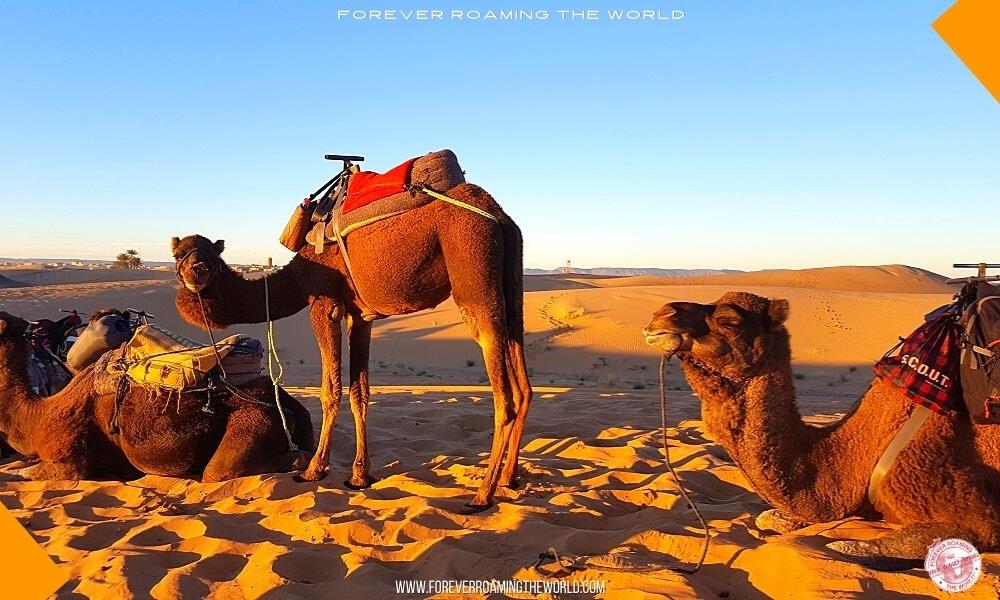 IGoMorocco Sahara desert tour pt 2 blog post - Forever Roaming the World - Pic 11