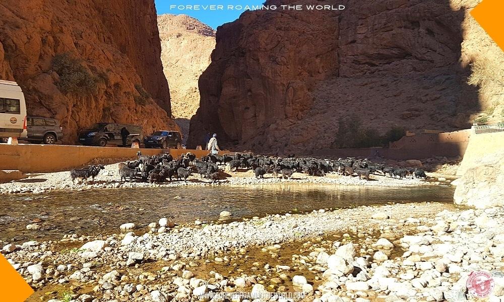 IGoMorocco Sahara desert tour pt 2 blog post - Forever Roaming the World - Pic 5
