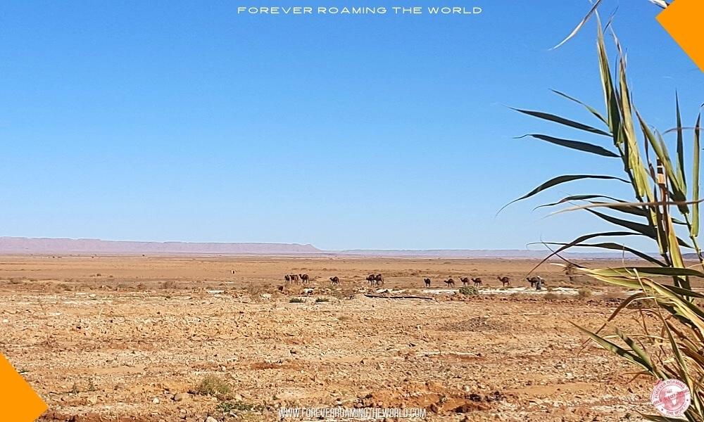 Sahara desert tour IGoMorocco blog post - Forever Roaming the Word - Pic 1