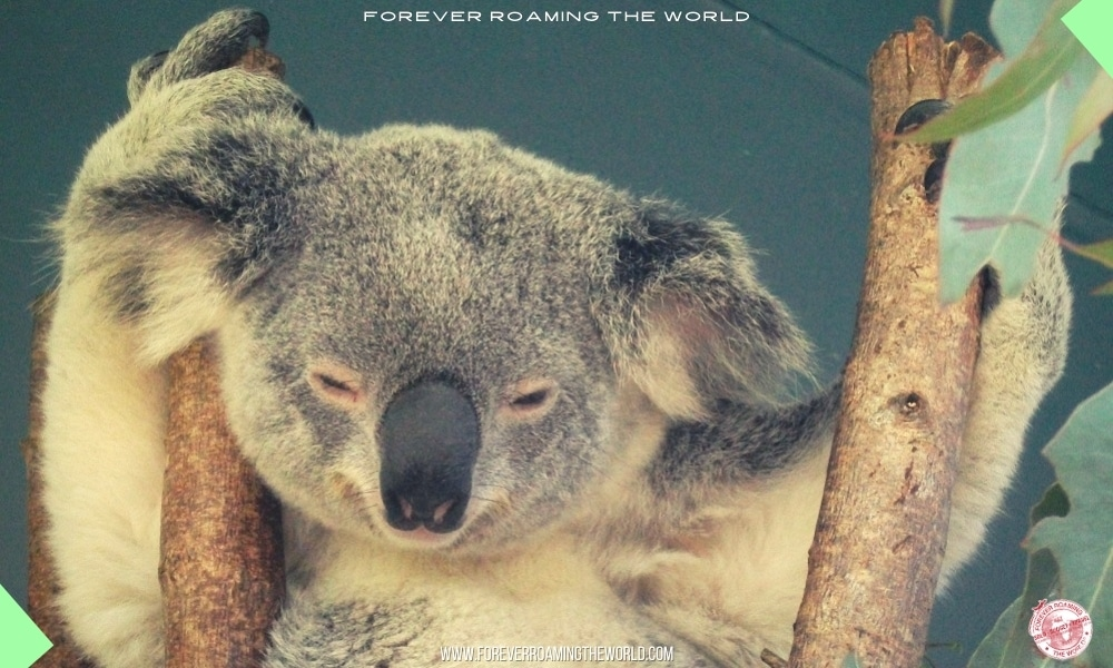 Backpacking Australia east coast overview - Forever Roaming the World pic 7